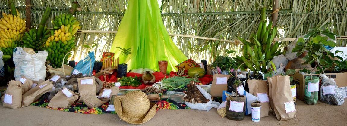 Festa da Semente promove agroecologia em Mato Grosso