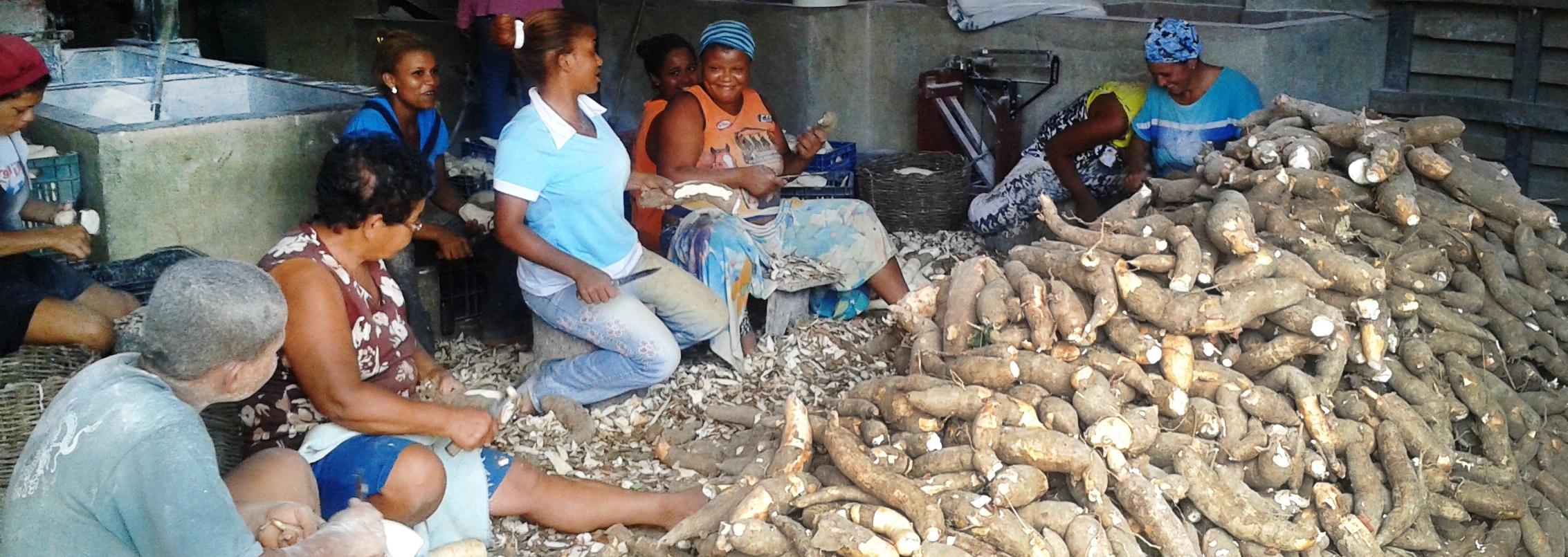 Agricultores familiares organizam cooperativa na Bahia