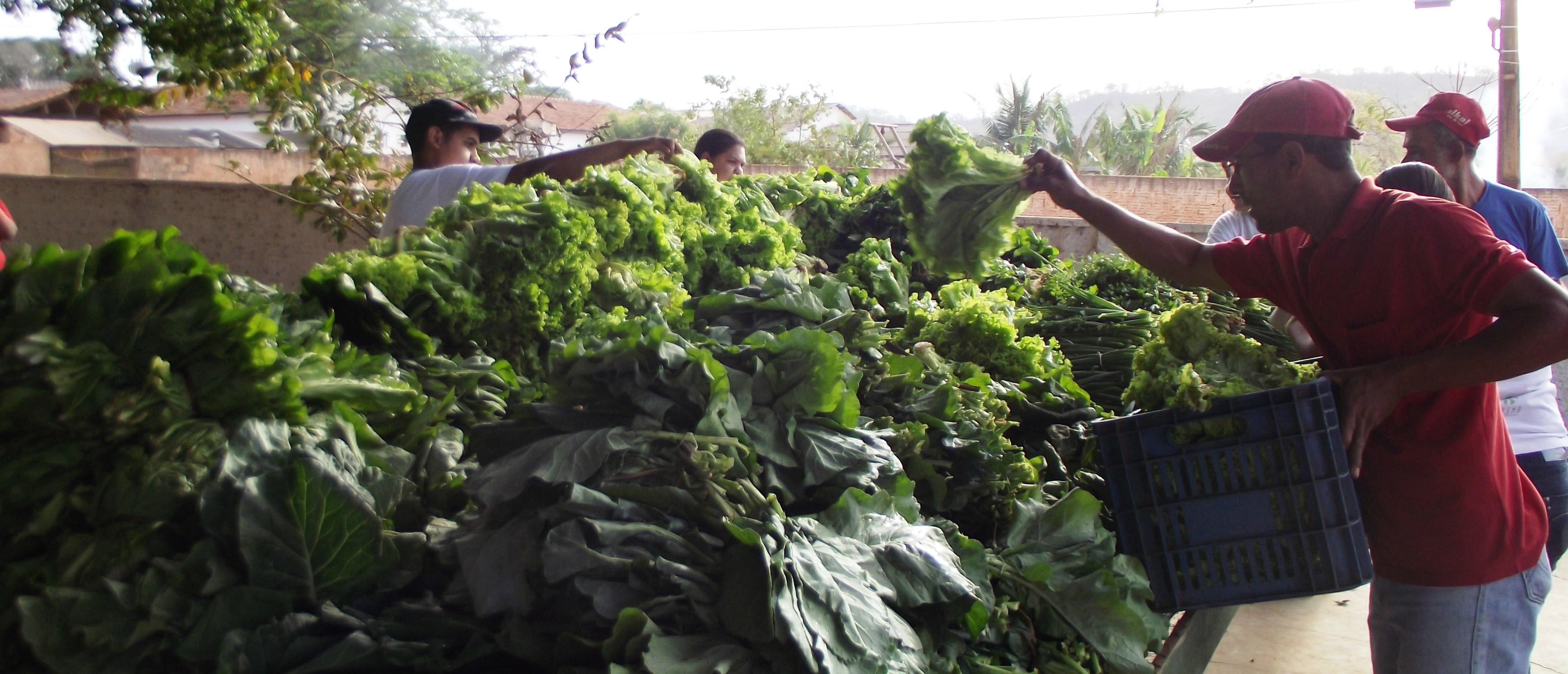 Comissão faz balanço de Plano Nacional de Agroecologia