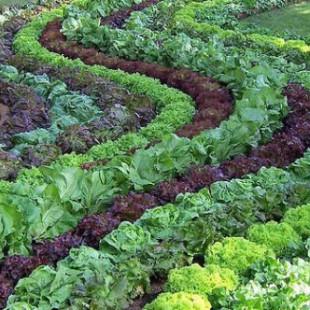 agroecologia_reprod vermelho