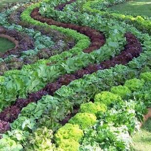 Cultivos variados protegem os solos. (Foto: Reprod.)