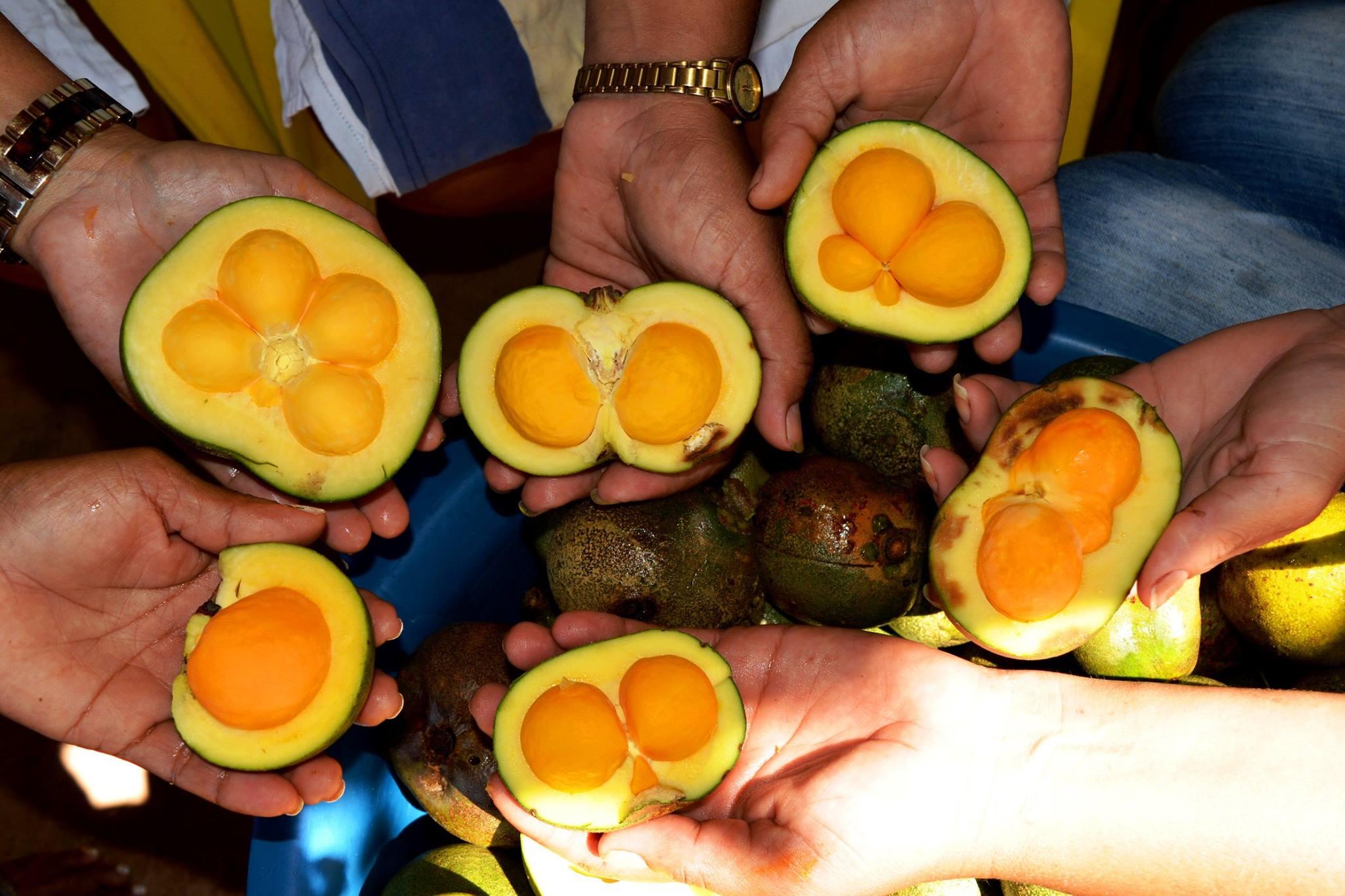 Mulheres do MT trocam saberes sobre pequi agroecológico
