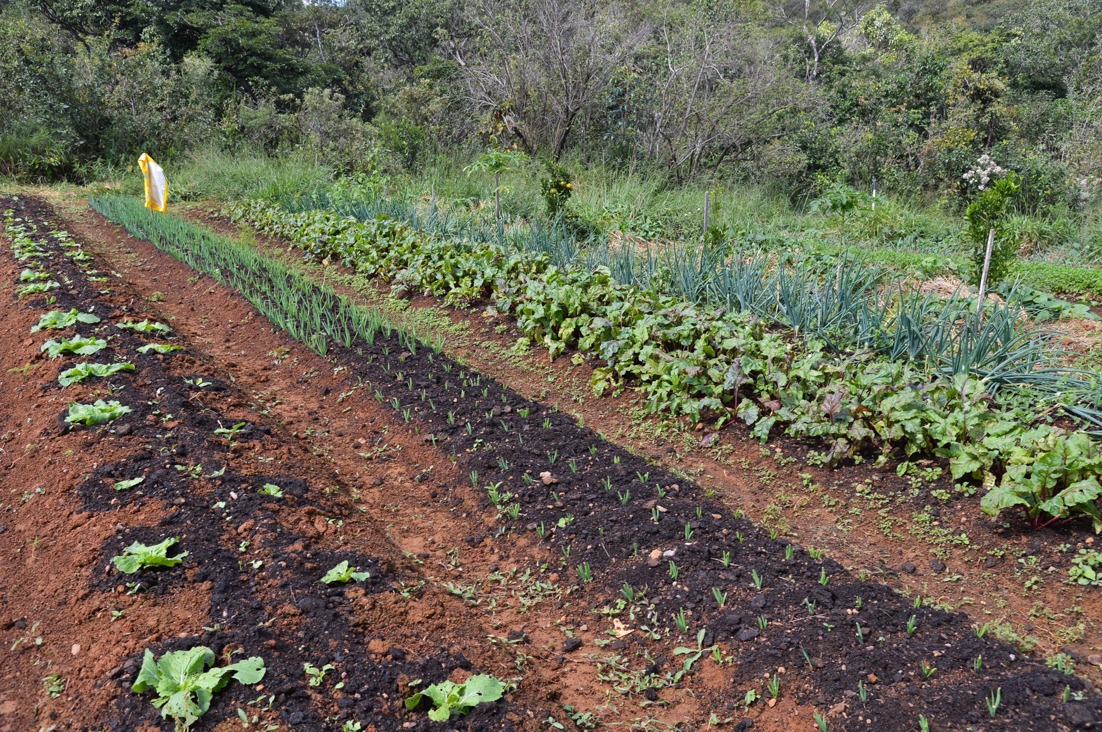 Associações agricultoras da Bahia conquistam edital