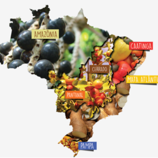 brasil_biomas_campanha