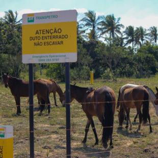 Foto: Campanha Antipetroleira Nem Um Poço a Mais / FASE ES