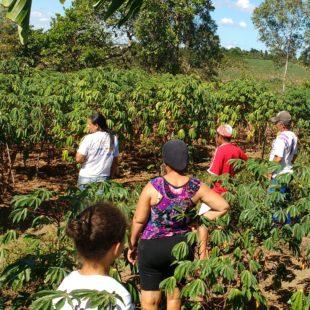 Plantação de mandioca e banana.