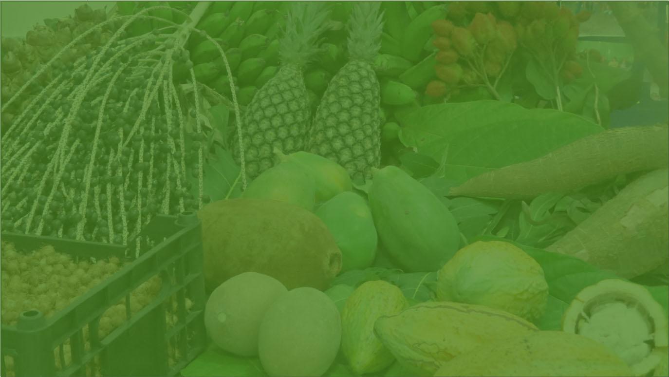 Encontro de Agroecologia da Amazônia será no Pará