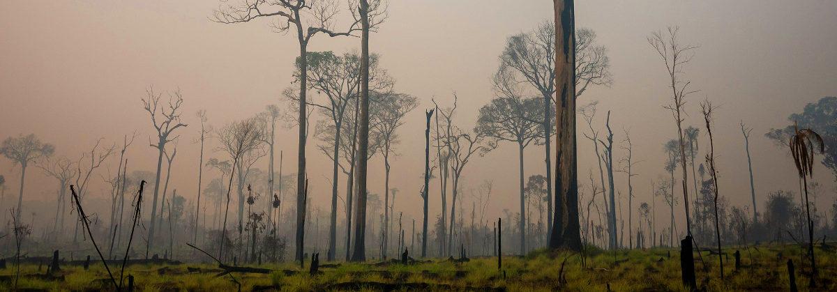 Amazônia em chamas! O que fazer?